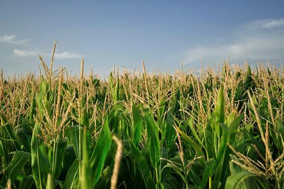 Jornada: Aplicacions de la biotecnologia a l'agricultura