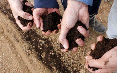 Can Calopa: agricultura social, vi i oli