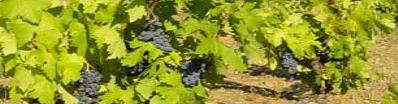 Jornada Tècnica en Viticultura: «Terrers vitícoles. Maneig i millora dels sòls»