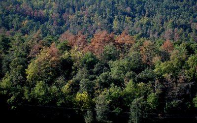 Taula rodona sobre la gestió del bosc públic de propietat municipal